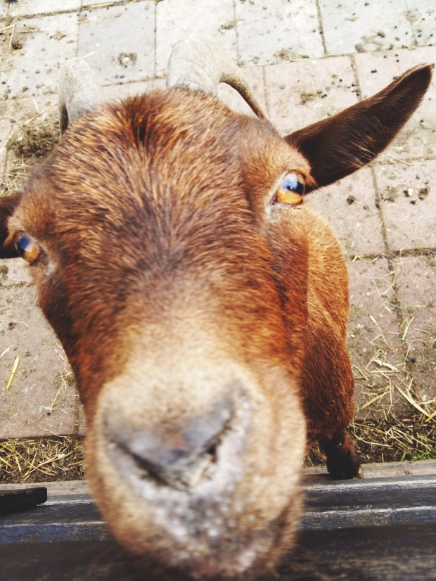 New best friend at Zaanse Schans. byamandalia