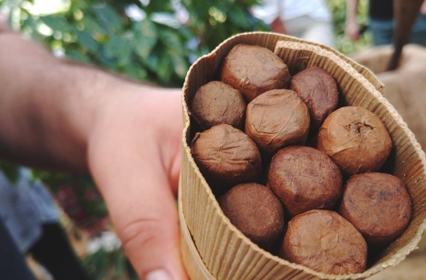 Hand rolled Cigar from farms @ Vinales