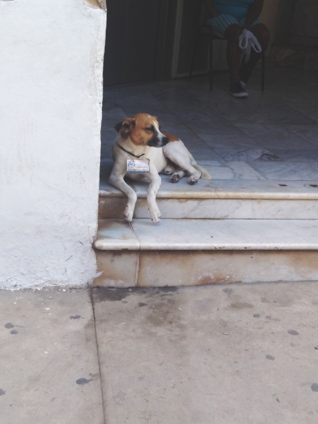One of the many stray dogs in Habana